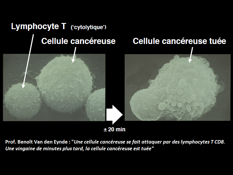 iteos cellule cancereuse